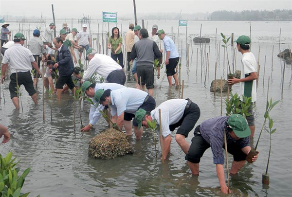 Thua Thien – Hue plants mangrove forests for eco-tours