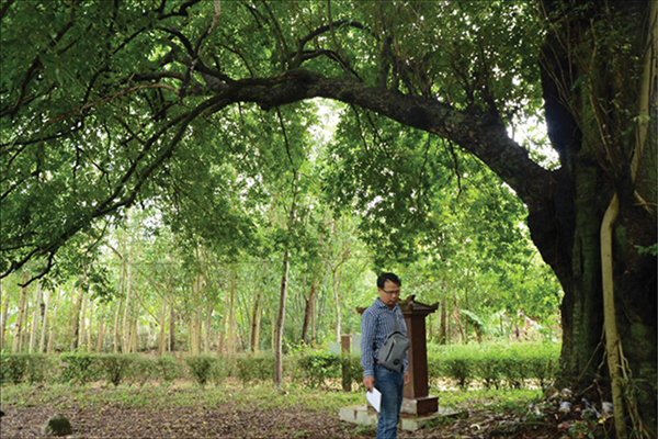 Preserving the heritage golden apple tree in Phuoc Tich ancient village