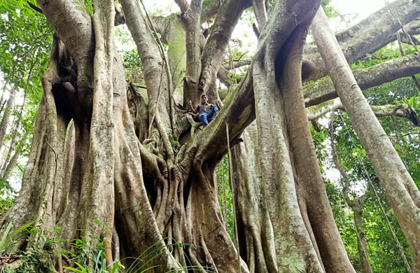 4,018 old trees across the country have been recognized as Vietnamese Heritage Trees