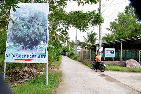 Lộc vừng Heritage Tree is a tourist highlight of Hau Giang province